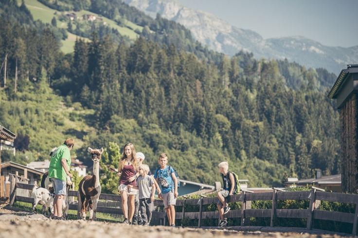 alpaka-wanderung_alpina_zillertal